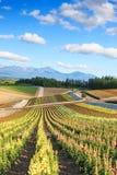 Flower garden in Kamifurano, with mountain view in Furano, Hokkaido Japan Royalty Free Stock Photo