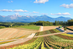 Flower garden in Kamifurano, with mountain view in Furano, Hokkaido Japan Stock Image