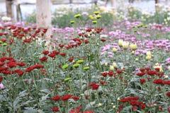 Flower garden. Location of Yogyakarta in Yogyakarta Special Region.Yogyakarta Cityis located in Indonesia with beautiful view Stock Image