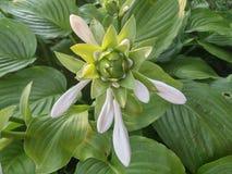 Flower. Garden magic Stock Image
