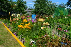 Flower garden. Many beautiful flowers in the home garden Royalty Free Stock Image