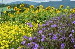Flower garden. Royalty Free Stock Photos