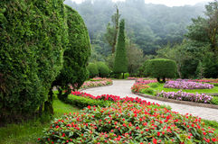 Flower garden and mist background Stock Photos