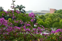 Flower Garden with Modern Architecture Stock Photography