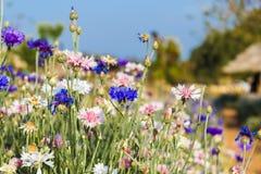 Flower garden monjam resort Stock Photos