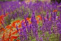 Flower garden Royalty Free Stock Images
