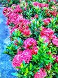 Flower garden. Bloom in morning Royalty Free Stock Images