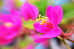 Flower in garden. Nature focus macro Stock Photos