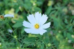 Flower in garden. Nature flower garden fresh blossom  Thailand chiangmai flower lover naturelover Stock Photography