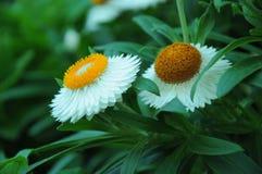 Flower in garden Stock Photos
