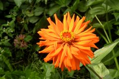 Flower in garden 2. Nice flower blooming in the garden in mid spring. Image enchanting beauty of nature stock photography