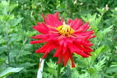 Flower in garden 3. Nice flower blooming in the garden in mid spring. Image enchanting beauty of nature stock photos