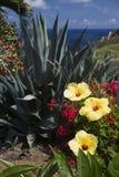 Flower Garden Overlookin Ocean. Yellow hibiscus highlight a garden overlooking the Pacific Ocean in Maui stock photo