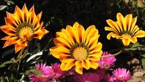 Flower garden at park in Chile. Flower  garden at a park in santiago, Chile stock video