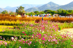 Flower garden. This photo are flower garden taken at Khoayai Thailand Royalty Free Stock Photo