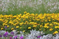 Flower garden Stock Photography