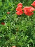 Flower in the garden stock image