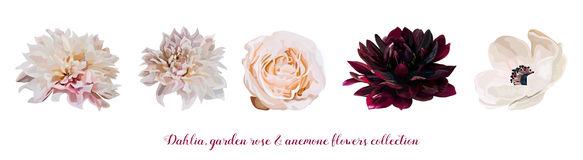 Flower Garden pink Rose, Dahlia Anemone designer different flowers natural peach, burgundy red light pink elements in watercolor s