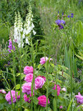 Flower Garden. With pink roses,iris and foxgloves Stock Photos