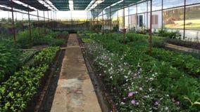 Flower garden stock video