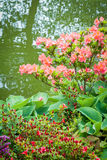 Flower Garden and Pond Stock Images