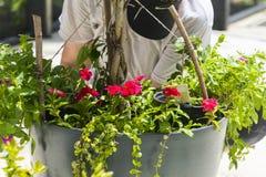 Flower Garden Pot Preparation Royalty Free Stock Photo