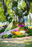 Flower garden is shaped peacock Stock Image