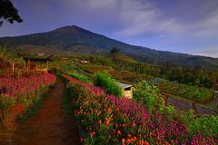 Flower Garden of Silancur Wonderful Magelang Indonesia. Asia royalty free stock photos