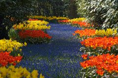 Flower garden in spring Stock Photography