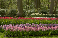 Flower garden in spring. On a sunny day Royalty Free Stock Image