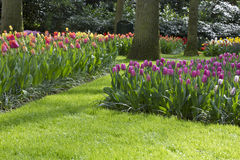 Flower garden in spring. On a sunny day Stock Photo