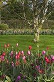 Flower garden in spring. On a sunny day Stock Photos