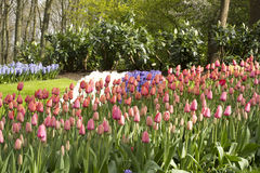 Flower garden in spring. On a sunny day Stock Image