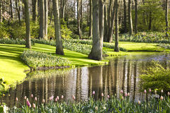 Flower garden in spring. On a sunny day Royalty Free Stock Images