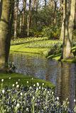 Flower garden in spring. On a sunny day Stock Photography