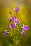 Flower Stock Photo