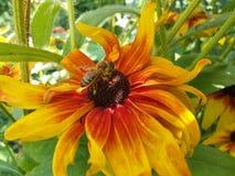 Flower. Garden summer Royalty Free Stock Photography