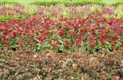Flower garden in summer Royalty Free Stock Photo