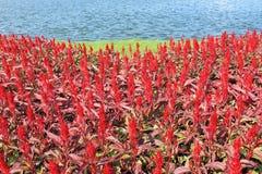Flower garden in summer Stock Images