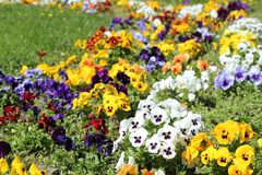 Flower Garden In The Sunlight Royalty Free Stock Image