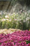 Flower garden with sunlight Royalty Free Stock Image