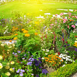 flower garden and sunrise Stock Photography