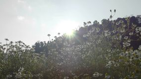 Flower garden sunrise stock video