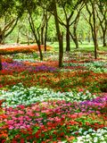 Flower garden Royalty Free Stock Photography