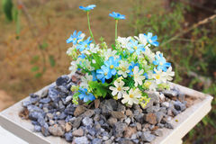 Flower in garden Royalty Free Stock Image