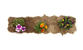 Flower garden top view Stock Image
