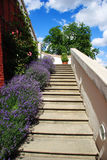 Flower garden up staircase Royalty Free Stock Photo