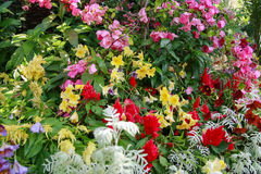 Flower garden. A variety of colorful flowers altogether Stock Photo
