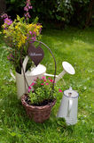 Flower garden watering can Royalty Free Stock Photo