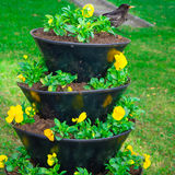 The flower garden on which the bird sits. stock photos